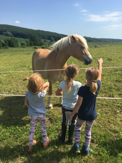 Překonání strachu z pohlazení koně