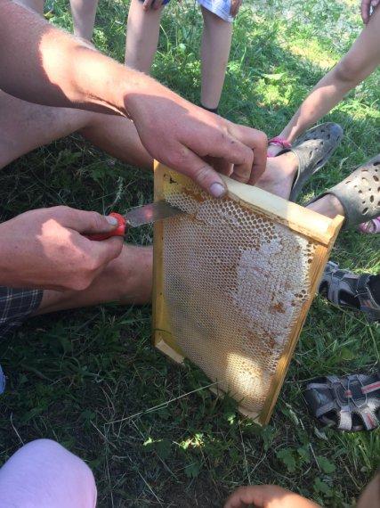 Ochutnávka medu